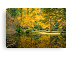 Bursts of yellow at Alfred Nicholas Gardens Canvas Print