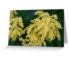 wattle Greeting Card