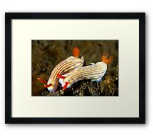 Nudi Pair Framed Print