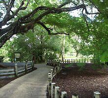 Flammingo Park, Davie, Florida by sonia neira-matthews