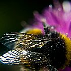 A busy Bee by Steve  Salter