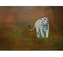 W is for......White Tiger Photographic Print