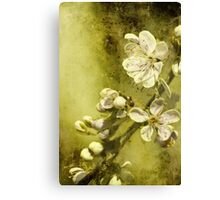 U is for ......Under the plum tree Canvas Print