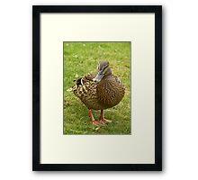 Mrs Duck Framed Print
