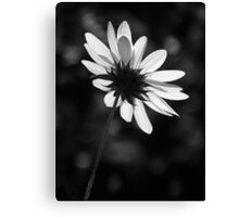 Beautiful Black And White Canvas Print