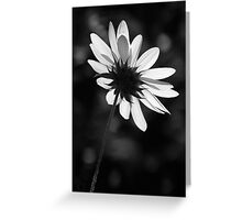 Beautiful Black And White Greeting Card