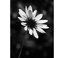 Beautiful Black And White Photographic Print