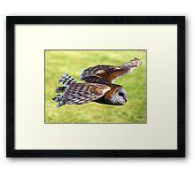 Honed In, Barn owl Framed Print