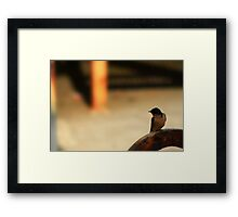 Waiting At The Crossing Framed Print