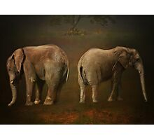 I is for .......Ivory Photographic Print