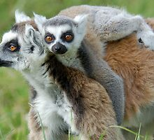 Hold Me Mum! by ApeArt