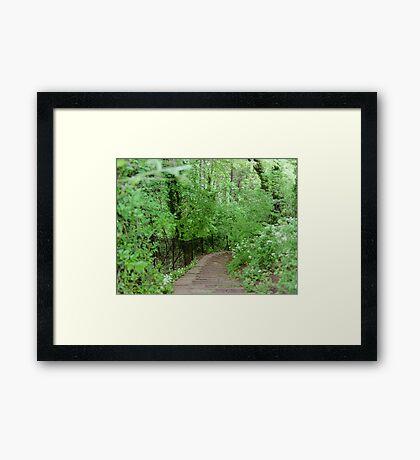 The Path in Bath - England Framed Print