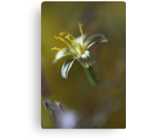Yellow symphony (from wild flowers collection) Canvas Print