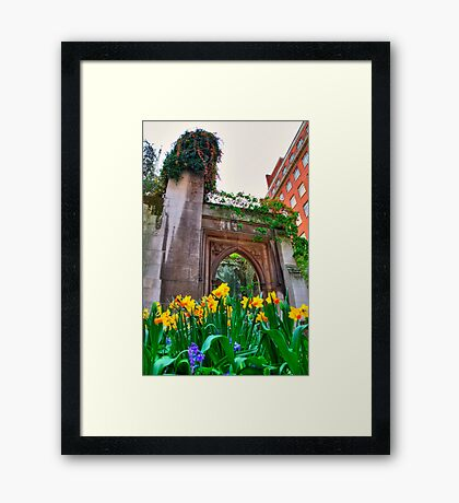 St Dunstan in the East & The Deadly Daffodils - London Framed Print
