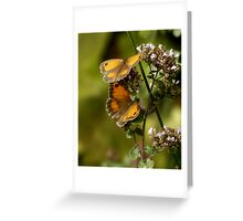 Gatekeeper  Butterflies Greeting Card