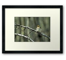 Savannah Sparrow Framed Print