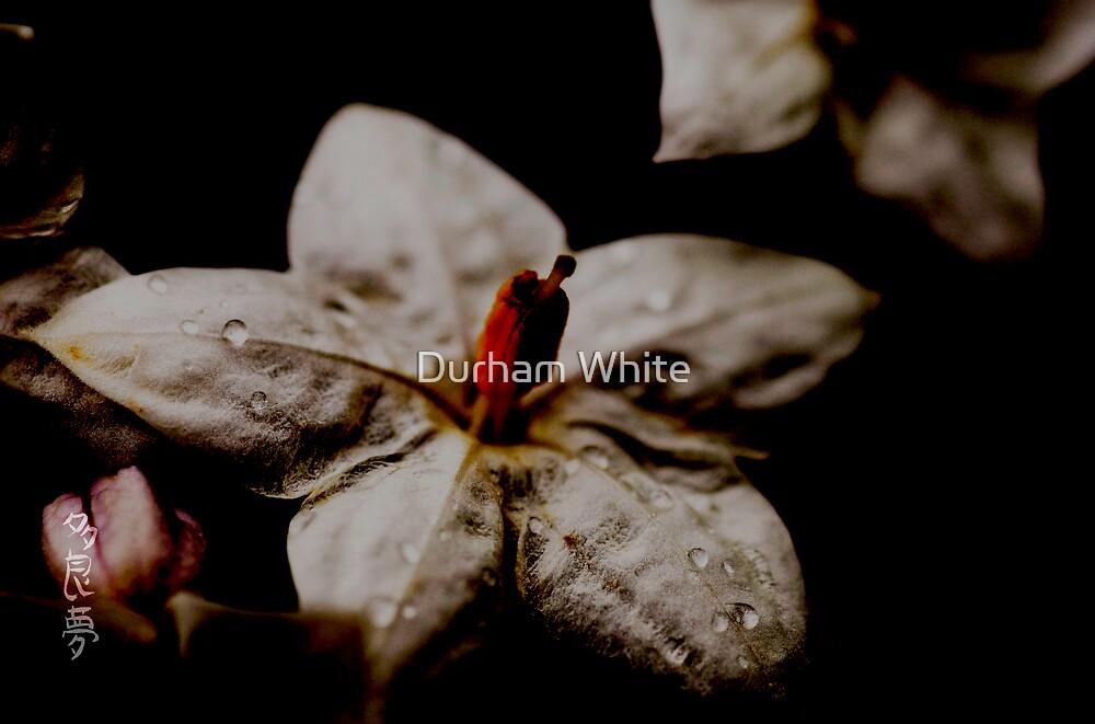 light in the dark by Durham White