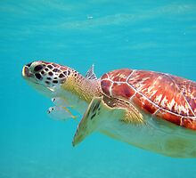 Sea Turtle by Nicole Meyer