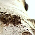 Peek-A-Boo! by Bryony Griffiths