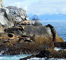 Sea lions in the sun by becmayr