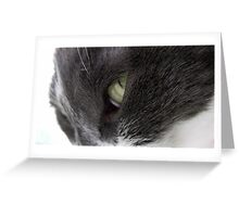 Feline Greeting Card