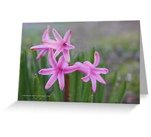 Hyacinthus Orientalis - Queen Of The Pinks | Center Moriches, New York Greeting Card