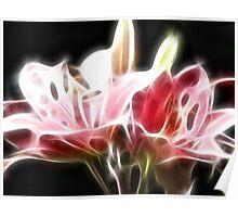 Radiant Blush Poster