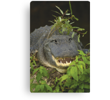 Alligator with hat of weeds Canvas Print
