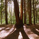 Devon: Light Through the Trees at Stover Country Park by Rob Parsons
