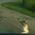 Seagulls Going by lizwaltzes