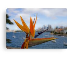 Bird of Paradise (Strelitzia) - Sydney Harbour - Australia Canvas Print