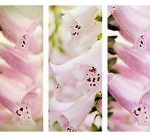 Foxglove Triptych  by Jessica Jenney