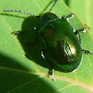 Green Bug--Me And My Shadow by MaeBelle
