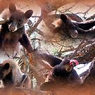 For the Love of Bears by Jan Landers