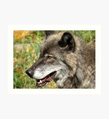 Wolf in Grass Art Print