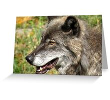 Wolf in Grass Greeting Card