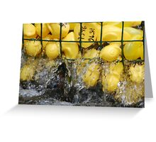 The Duck Race Greeting Card