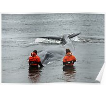 Whale rescue Poster