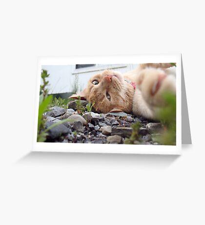 Neighborhood Cat 2 Greeting Card