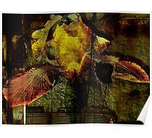 Textured Iris Poster