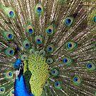 Avian Smattering by Len Bomba