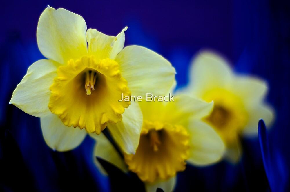 Blooming in Blue by Jane Brack