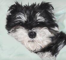 Baby Cloey by Dyle Warren