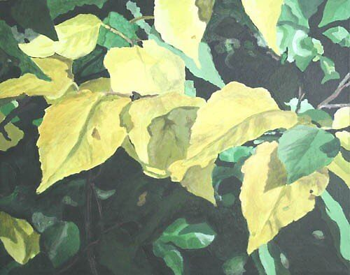 Aspen Leaves by Christopher Clark