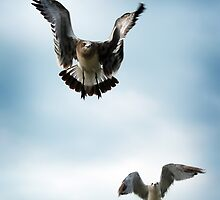 Take Flight by Jane Brack