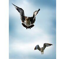 Take Flight Photographic Print