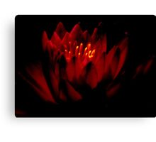 THE   WARM GLOW  OF A   WATER  LILY    Canvas Print