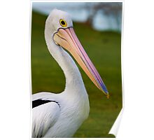 Pete the Pelican!! Poster