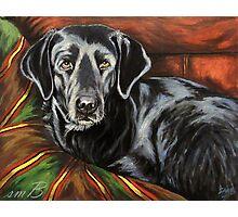 Buddy Alpha Dog Photographic Print