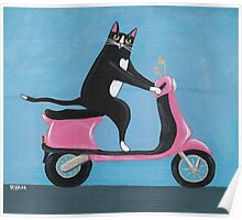 Cat on a Vespa Poster